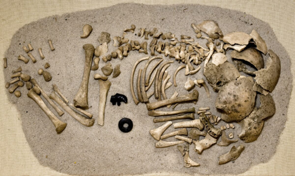 A childs skeleton which appears to be badly fragmented
