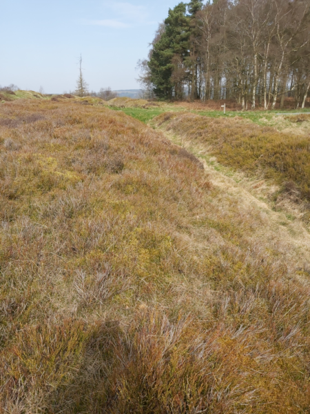 A colour photo from Cawthorn Camps showing a narrow path through thick grass, linking to another path at a crossroad - there are mature trees in the top right, and a waymarker that highlights the photos large scale