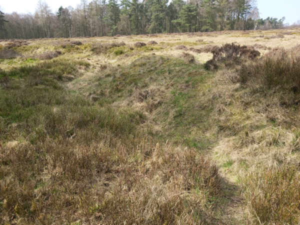 A colour photo from Cawthorn Camps showing a narrow winding path through an area of rough heathland, with thick grass, heather, and gorse - along the top egde there is a band of mature trees that then leads into the distance at the right hand side