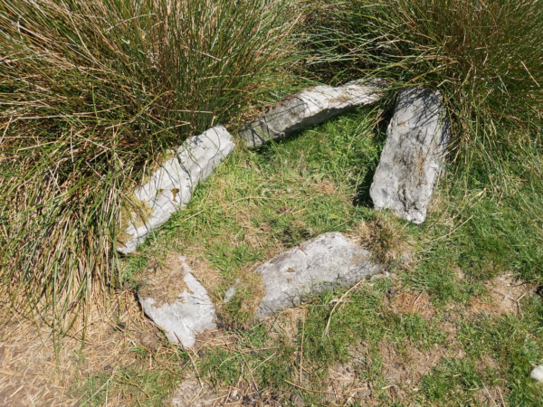 A colour photo showing five roughly rectangular stones set in a irregular pattern to form a burial cist - there are also some large clumps of tussock grass at the top edge of this cist