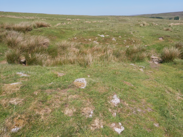 A colour photo showing a large area of grassland on Wheeldale Moor - a hollow patch with tussocks grass growing within it in cuts across this photo - on either side there are some large stones visible through the dry grass - on the far side there is a clearly defined rectangular area of dry grass