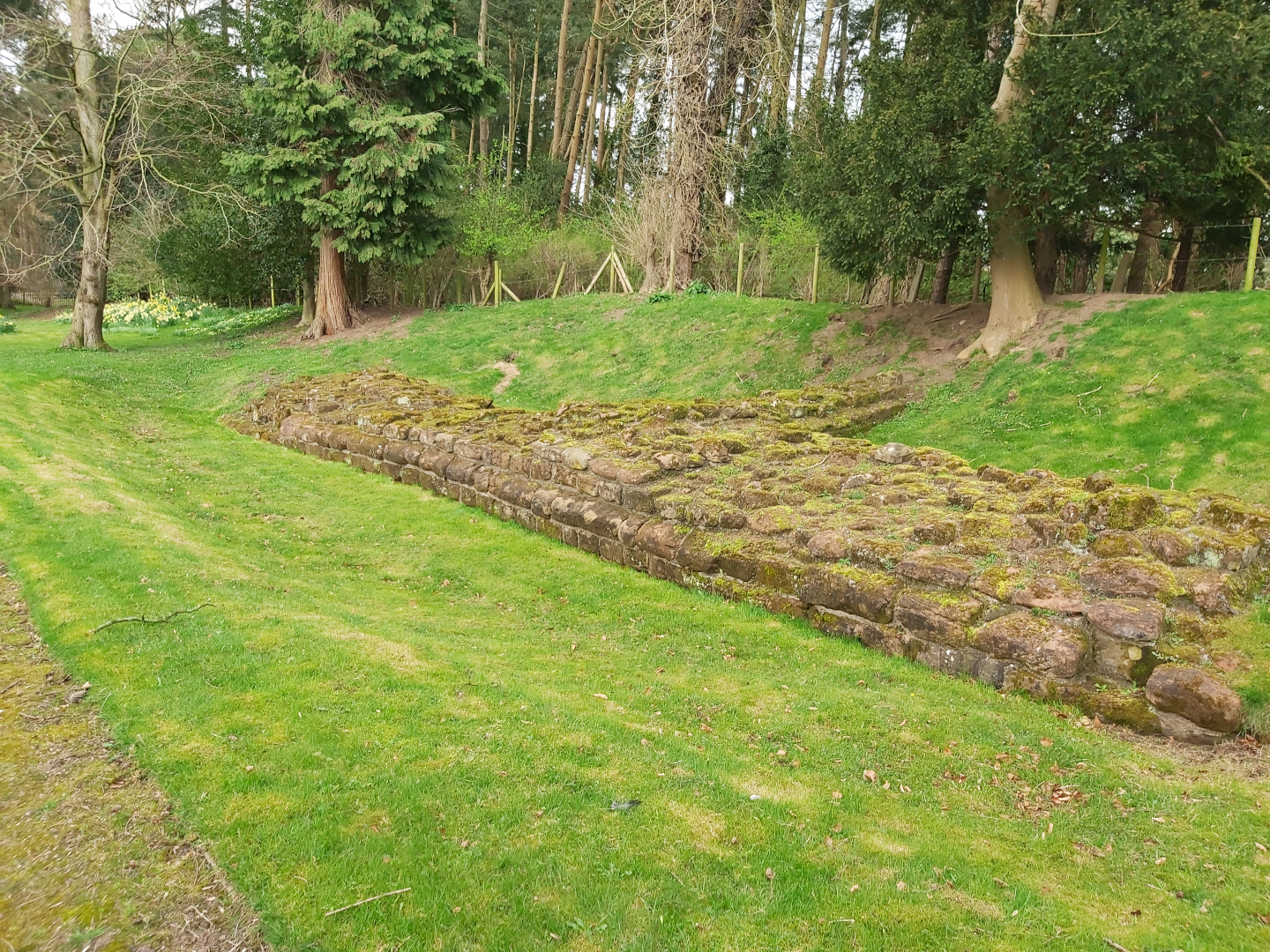 A colour photo showing the base of a stone wall bordered by grass banks - there are three courses of stonework making up the remains of this wall, and these are covered in low level weeds and moss - in the background there is a dense area of mature trees